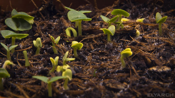 frame from a video: 3D CG incorporated into live footage: seedling time lapse